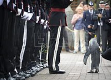 Sir king penguin is promoted to rank of Brigadier, inspects Norwegian troops