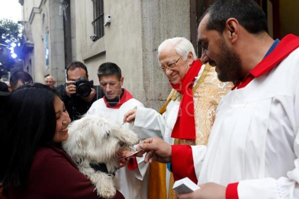 Animals get blessing in Spain for Saint Anthony