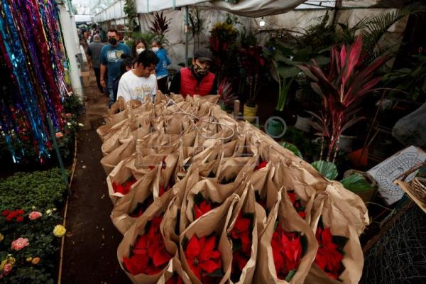 Poinsettias still provide Christmas cheer in Mexican homes amid pandemic
