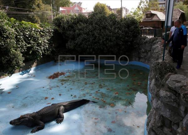 World's oldest captive alligator lives in Belgrade Zoo