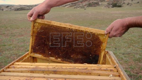 Beekeeping boosts rural development and youth employment amid Covid crisis