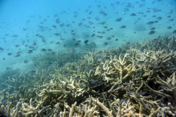Great Barrier Reef has lost more than half its corals since 1995