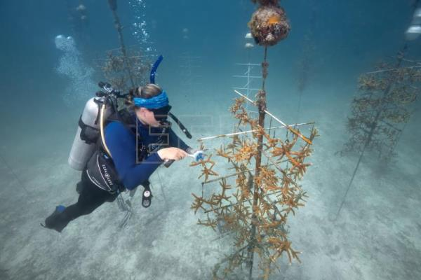 Program to restore US coral reefs gets $3.5 million donation from UAE