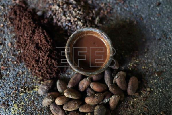 Costa rica seeks to revive cocoa, God's gift to the region