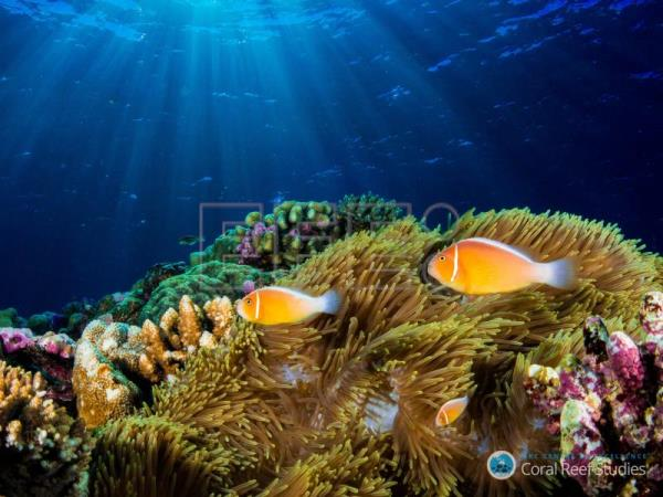 Scientists survey 500 million corals in Pacific Ocean, more than expected