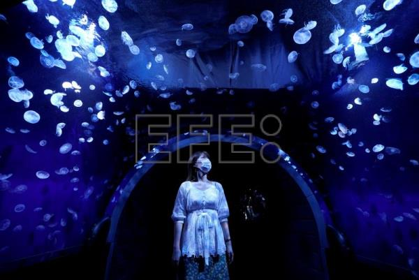 Tokyo aquarium launches mesmerizing panoramic jellyfish tank