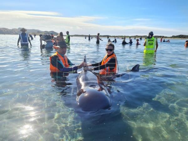 Rescuers launch 2nd rescue attempt for stranded New Zealand pilot whales