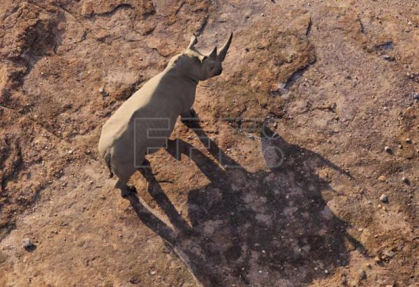 Rhino poaching falls by 53 percent in South Africa