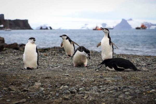 Tourism in Antarctica, the icy continent's lifeline and largest risk