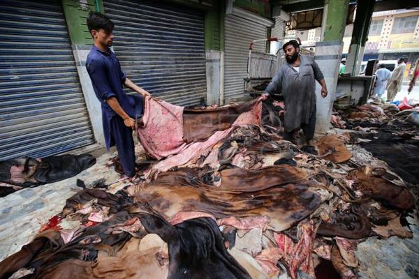 Warehouse of animal skins to be used as leather products