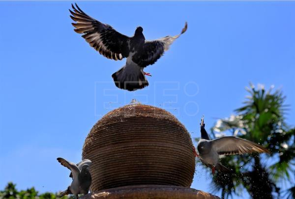 Pigeons cooling down on a hot day in Bucharest