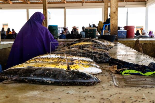 Turning the tide: Somalia's growing appreciation for fish