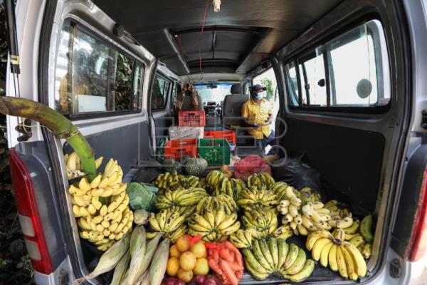 From Savannah ranger to fruit stall driver