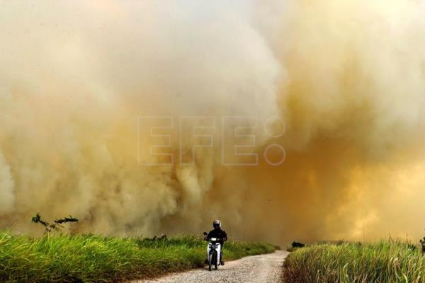 In 5 years, Indonesian fires destroyed an area the size of Denmark