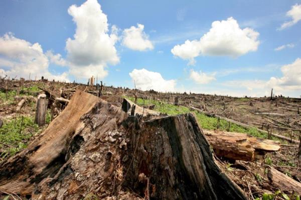 Deforestation in Brazil's Amazon in 2019 was 85 percent greater than in 2018