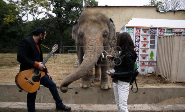 Elephant that captured Cher's heart prepares for retirement in Cambodia