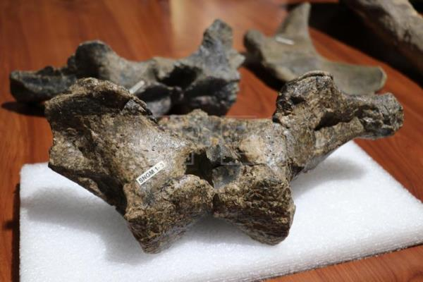 Fossils of new dinosaur species found in Chile