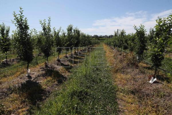 Insects, scrub aid sustainable agriculture in Uruguay