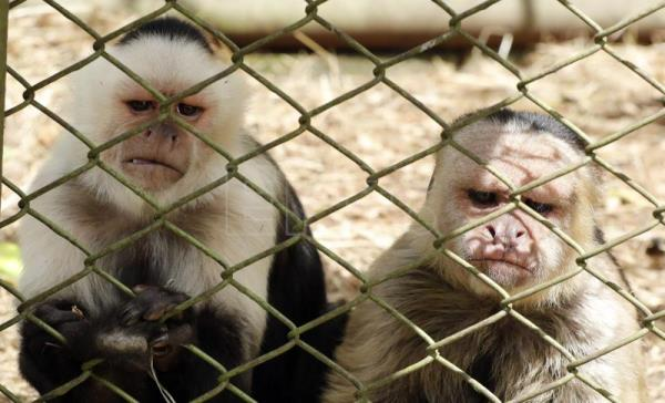 Colombia, victim of lucrative exotic animal smuggling