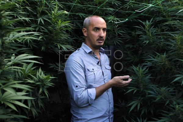 "(FILE) A photo made available on 10 March 2015 shows Uruguayan sociologist Diego Pieri speaking at a marihuana farm in Montevideo, Uruguay, 09 March 2015. Uruguay on 08 December 2016 inaugurated the first cannabis museum in South America, seeking to show visitors the history of cannabis and educate them about the ""enormous variety of uses"" the plant has, according to Eduardo Blasina, its director. EPA/Hugo Ortuno"