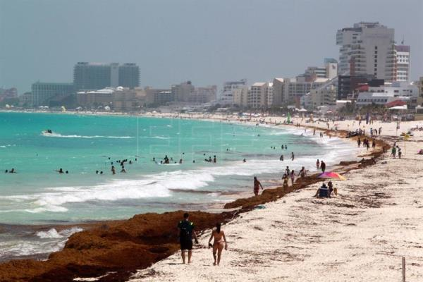 Mexico's Caribbean beaches face another seaweed invasion ...