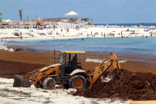 Mexico fears seaweed invasion will deter tourists | Life | English