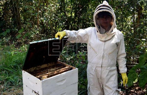 Beekeeping, a path to empowerment for rural Colombian women