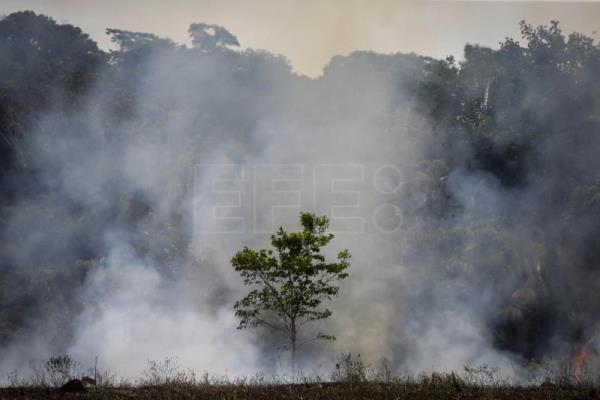 Deforestation of Brazilian Amazon grew by 222 percent in August