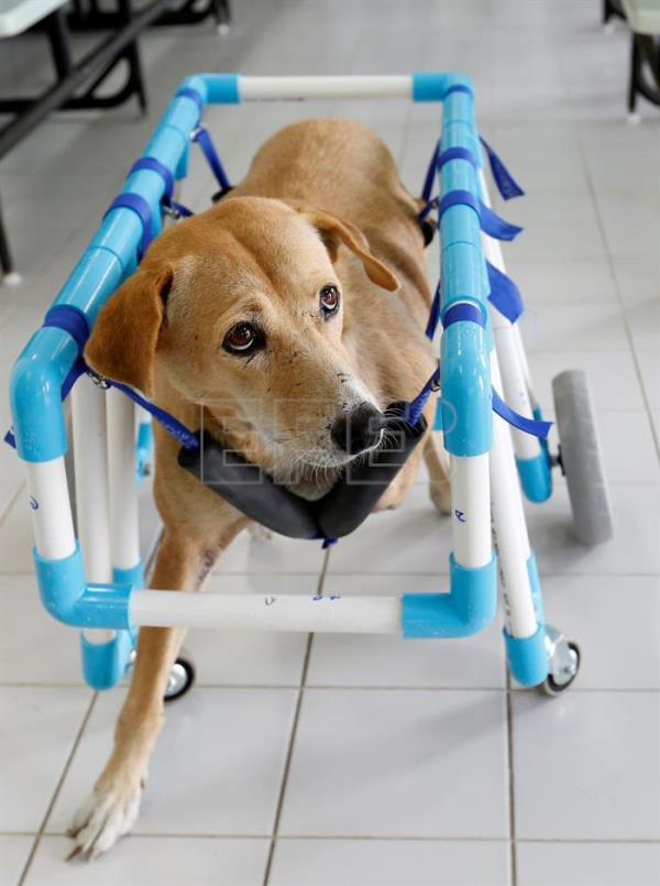Innovative wheelchairs help Thailand's disabled dogs get back on their paws