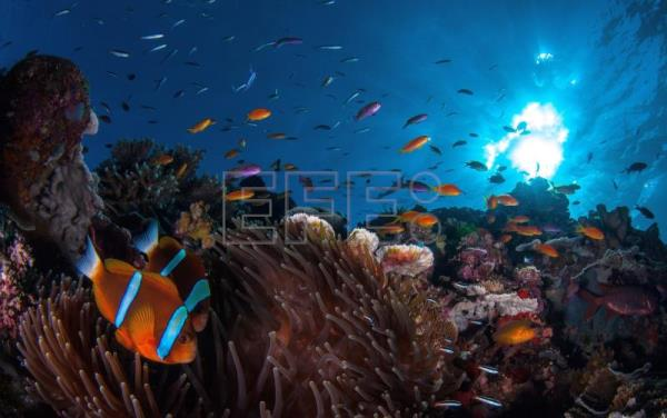 Report: Australia's Great Barrier Reef facing unprecedented challenges
