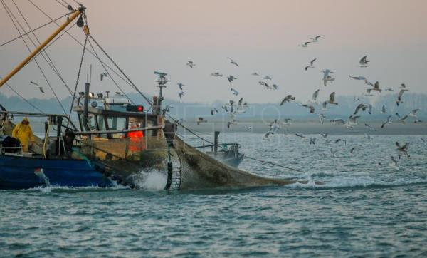 MEPs approve EU amendment to ban electric pulse fishing