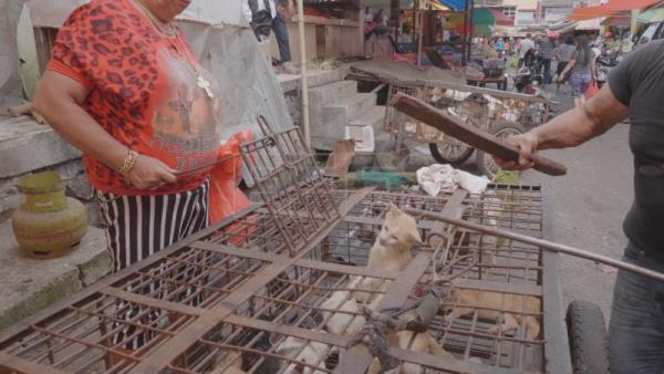 Activists urge Indonesia to ban cat, dog meat trade | World
