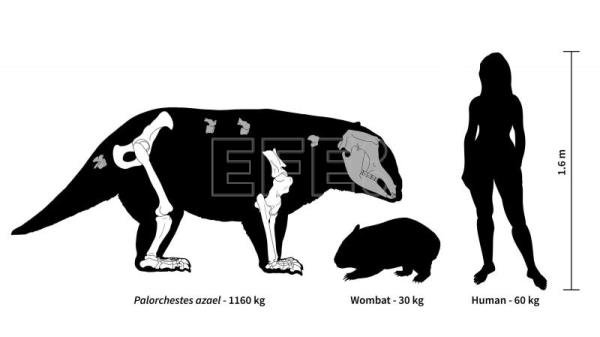 New study reveals giant size of extinct marsupials that once roamed Australia