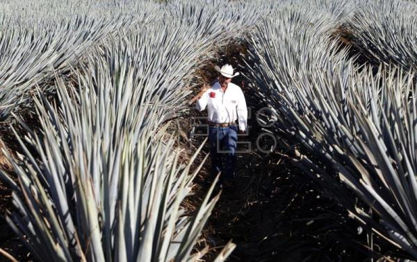 Tequila makes its mark in China after sustained marketing efforts