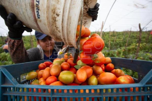 Bilateral deal reached on Mexican tomato exports to US