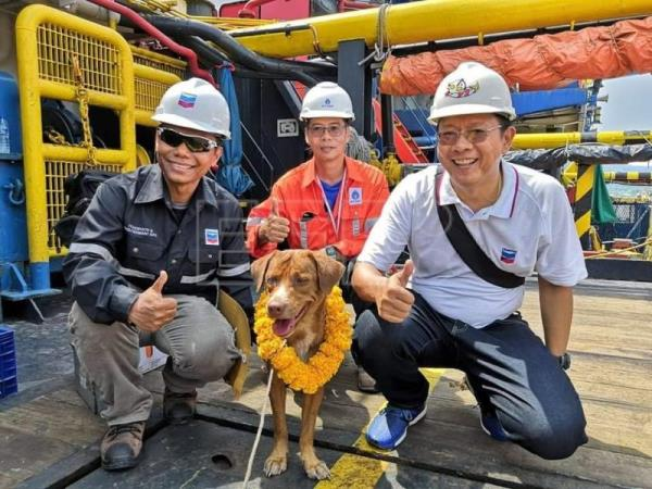 Dog pulled from Gulf of Thailand to be adopted by rescuer