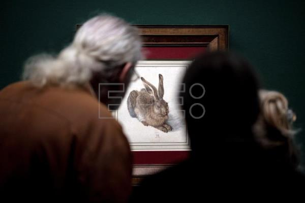 Young Hare comes out of hibernation for Albrecht Dürer exhibit