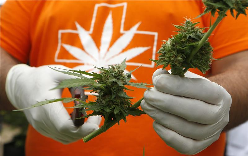 an assessment of the medicinal purposes of marijuana Marijuana for medical purposes  dried marijuana for medical use health canada introduced the mmprs in june 2013 with the stated goals of addressing risks to.