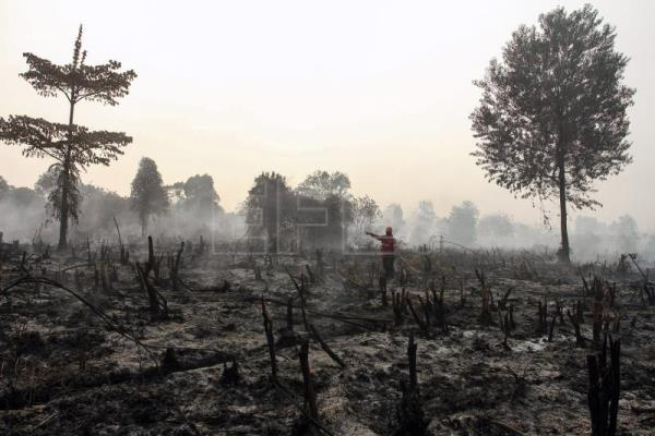 Forest fires sweeps Indonesia as smoke spreads to neighboring countries