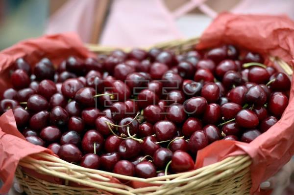 Village in Lebanon marks Cherry Day with abundant harvest