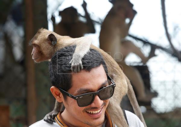 A monkey climbs on a man's head at the viewpoint of Wat Khao Takiab temple, before Thai National Park officials caught them for sterilization in a bid to control the birth rate of the monkey population near Hua Hin city, Prachuap Khiri Khan Province, Thailand, Jul. 15, 2017. EPA/NARONG SANGNAK