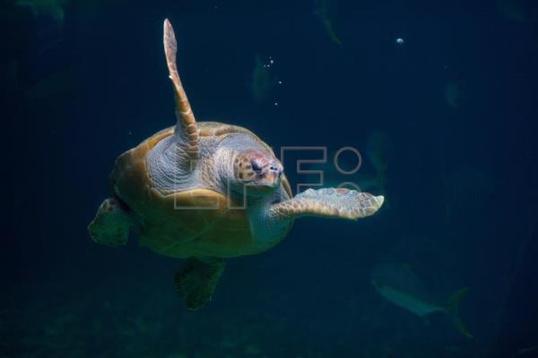 EU proposes loggerhead turtle as an indicator of pollution in Mediterranean