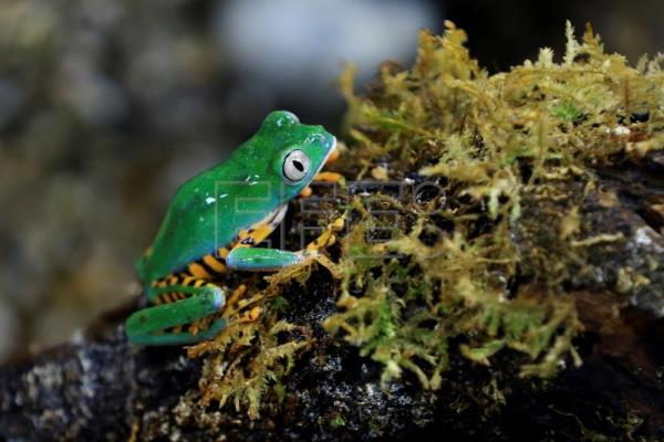 Ecuador's Life Raft of the Frogs blends research, conservation