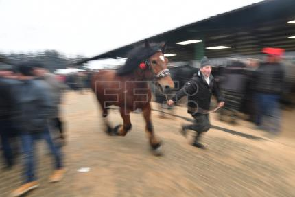 At Skaryszew, Poland hosts one of Europe's oldest horse trade fairs