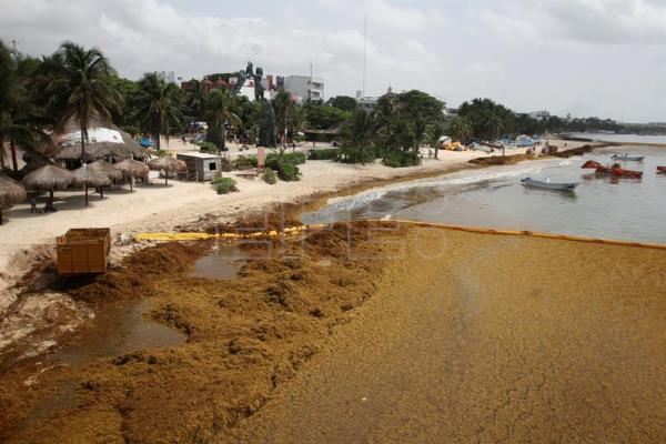 Mexican gov't takes charge of seaweed response