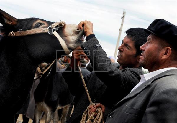 A man of the Uighur ethnic minority checks a donkey's teeth before deciding on buying it at the Sunday livestock market in Kashgar, China, in an archive image from September 6, 2009. Burkina Faso authorities banned donkey exports to China, a government spokesman told EFE on Thursday. EPA/FILIP SINGER