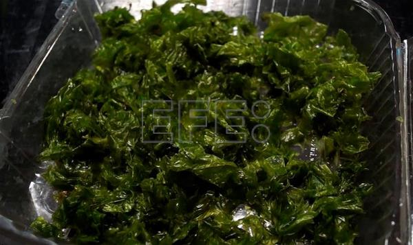 Mexican researchers explore use of seaweed as nutrition alternative