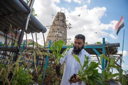 Egyptian village creates jobs, grows food on roofs in self-sufficiency drive