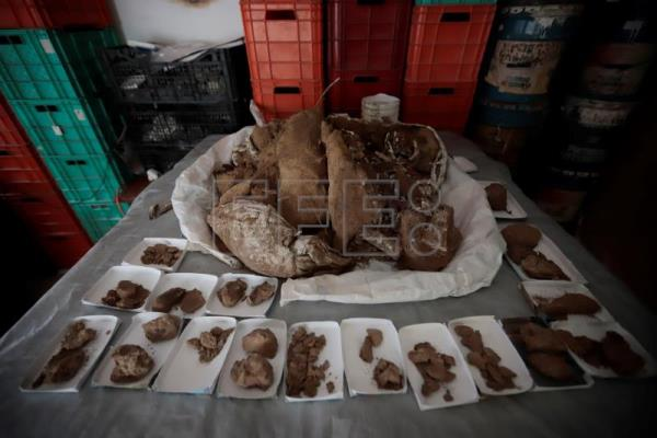 Mammoth fossil 13,000 years old reveals rich paleontology of west Mexico