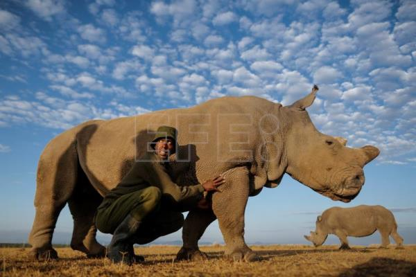 One step closer to saving northern white rhino from extinction